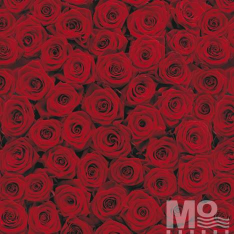 Roses Red Wallposter - 19506