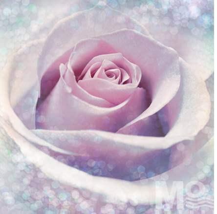 Delicate Rose Pink Wallposter - 19565